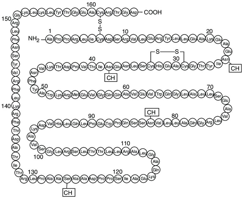 The-primary-structure-of-erythropoietin-EPO